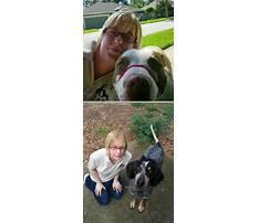 Dog training eustis fl.aspx Video
