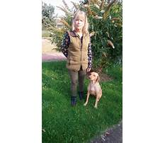 Dog training evesham Video