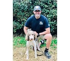 Dog training hickory north carolina.aspx Video