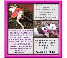 Dog training in genesee county mi.aspx Video