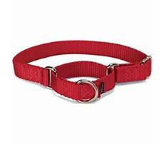 Dog training leashes leather.aspx Video