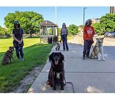 Dog training madiosn middleton wi.aspx Video