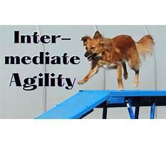 Dog training maysville ga elementary Video