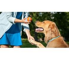 Dog training near effingham il Video