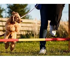 Dog training near olathe.aspx Video