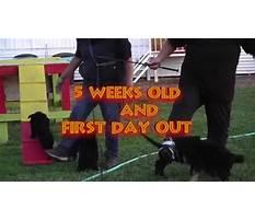 Dog training palmdale lancaster ca.aspx Video