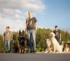 Dog training post falls.aspx Video
