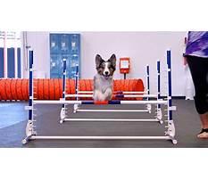 Dog training richmond indiana.aspx Video
