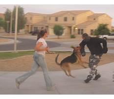 Dog training robinson tx Video