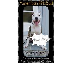 Dog training school cyprus Video