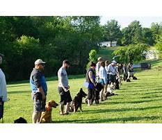 Dog training school in grand island.aspx Video
