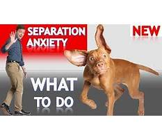 Dog training separation anxiety tips.aspx Video