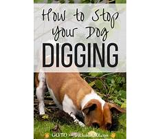 Dog training stop digging Video