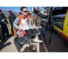Dog training summit county colorado.aspx Video