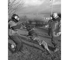 Dog training thornton merseyside Video