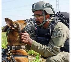 Dog training toronto aggression.aspx Video