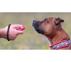 Dog training tricks with clicker.aspx Video