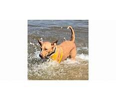 Dog training tullamarine.aspx Video