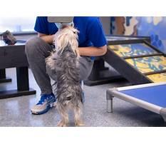 Dog training washington dc area.aspx Video