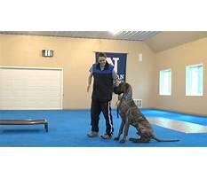 Dog training wellington co Video