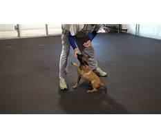 Dog trainingdk Video