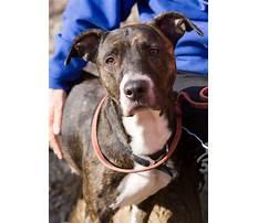Dog walking on two legs train.aspx Video