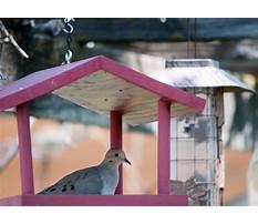 Dove feeder plans.aspx Video