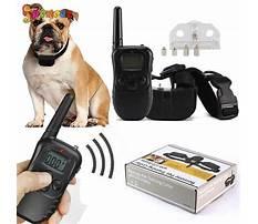 E collar dog training Video