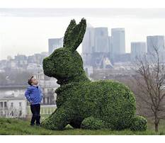 Easter bunny topiary Video