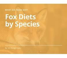 Emilia fox diet in the wild Video