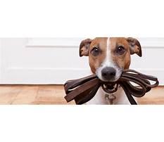 Field of dreams dog training roanoke va.aspx Video
