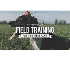 Field training french brittany Video