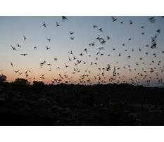 Free bluebird house plans.aspx Video