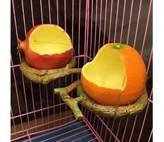 Fruit bird feeder program Video