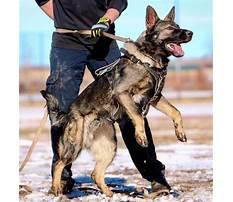 German shepherd dog training colorado springs.aspx Video