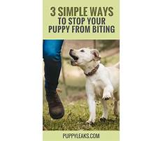 Get your puppy to stop biting Video