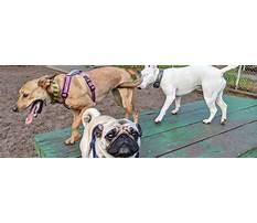 Golden gate dog training.aspx Video