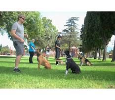 Group dog training exercises.aspx Video