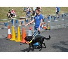 Guide dog training athens ga.aspx Video