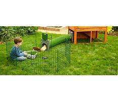 Guinea pig running around cage Video