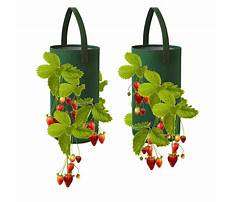 Hanging strawberry planters Video