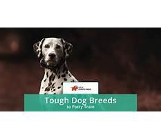 Hardest dog breed to potty train.aspx Video