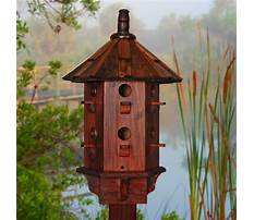 Homemade bird house for sale Video