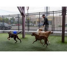 Houston dog training club.aspx Video