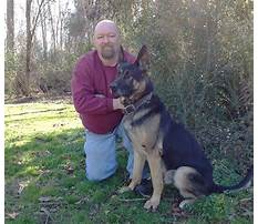 How much does protection dog training cost Video