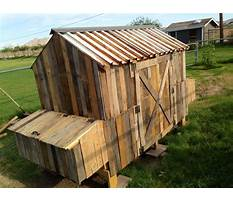 How to build a wood pallet chicken coop Video