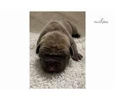 How to build an outdoor dog house.aspx Video