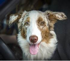 How to get dog training certification.aspx Video