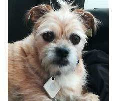 How to keep a dog from barking outside Video