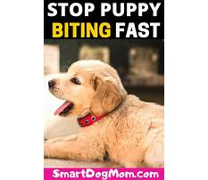 How to keep a dog from biting Video